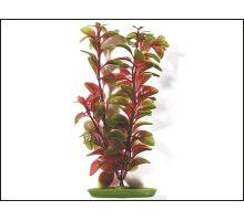Rastlina Red Ludwigia 38 cm 1ks VÝPREDAJ