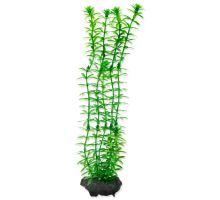 Rastlina TETRA Anacharis M
